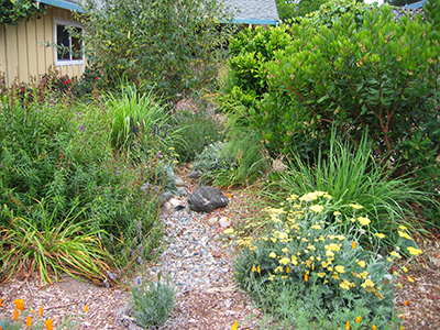 A Thriving Garden Watered with Rainwater and Greywater
