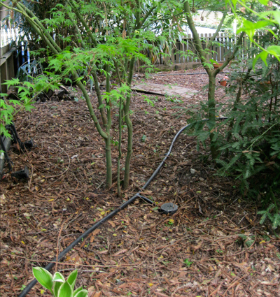 Photo of garden with plants being watered by a Laundry to Landscape greywater harvesting system